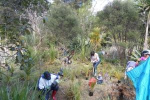 onedin-wetland-planting