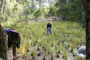 wetland-planting-two