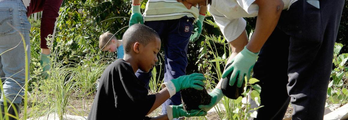 PTS_Oratia Planting 2